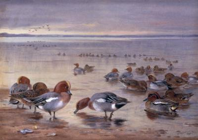 Widgeon and Teal, 1931