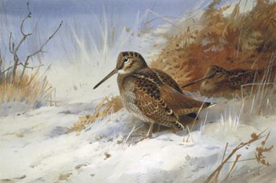 Winter Woodcocks