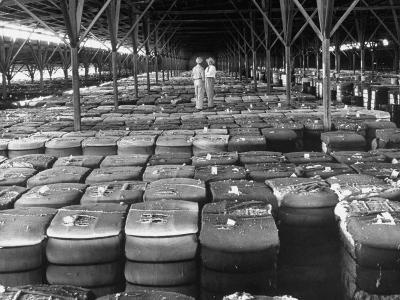Archie Underwood and Another Man Standing on Top of Great Bales of Cotton in One of His Warehouses-Alfred Eisenstaedt-Photographic Print