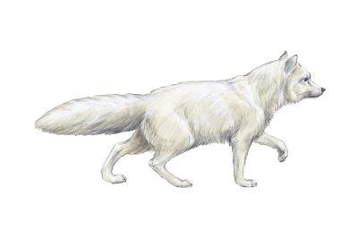 Arctic (Blue), Mammals Fox (Alopex Lagopus), Mammals-Encyclopaedia Britannica-Art Print