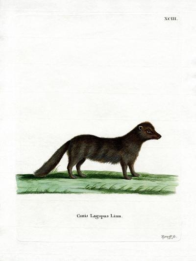 Arctic Fox--Giclee Print