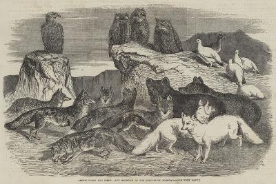 Arctic Foxes and Birds, Just Received by the Zoological Society-Harrison William Weir-Giclee Print