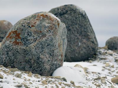 Arctic Hare Resting Near a Boulder-Norbert Rosing-Photographic Print