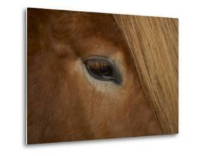 Close-Up of Horse's Eye by Arctic-Images