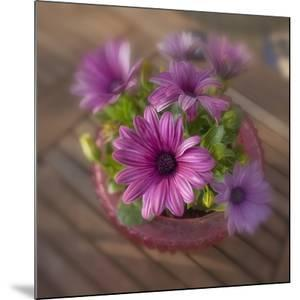 Daisies Planted in Pot by Arctic-Images