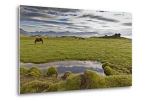 Horses Grazing by Abandon House, Vidbordssel Farm, Hornafjordur, Iceland by Arctic-Images