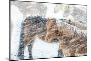 Horses outside during a Snowstorm. by Arctic-Images