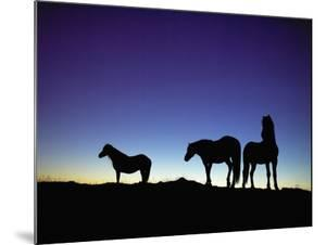 Icelandic Ponies Silhouetted against the Evening Sky by Arctic-Images