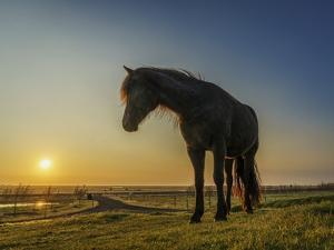 Portrait of Horse at Sunset. by Arctic-Images