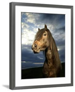 Portrait of Horse by Arctic-Images