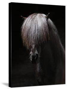 Portrait of Stallion by Arctic-Images