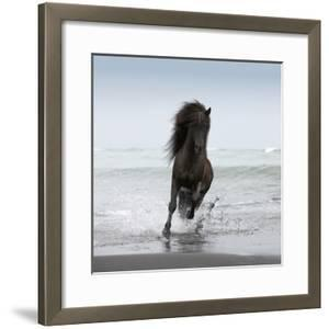 Stallion Running on Beach by Arctic-Images