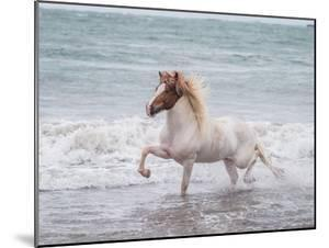 White Horse Running on the Beach, Iceland by Arctic-Images