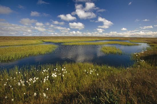 Arctic Tundra and Cotton Grass Summer Scenic North Slope Ak-Design Pics Inc-Photographic Print