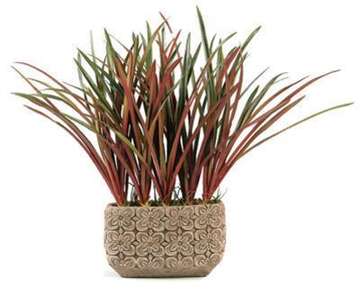 Areca Grass Planter - Wide