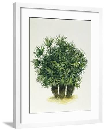 Arecaceae, Palm Trees--Framed Giclee Print
