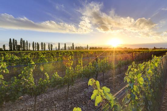Argentina, Mendoza, Lujan De Cuyo, Malbec Grape Wineries-Michele Falzone-Photographic Print