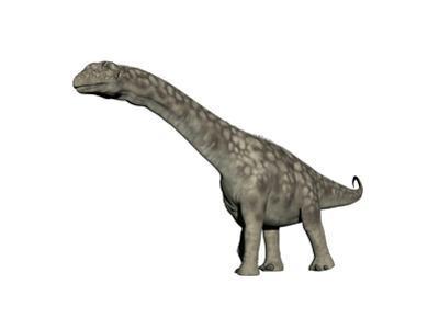 Argentinosaurus Dinosaur, White Background