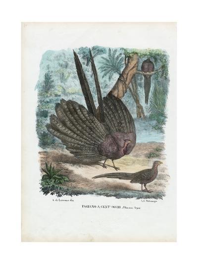 Argus Pheasant, 1863-79-Raimundo Petraroja-Giclee Print