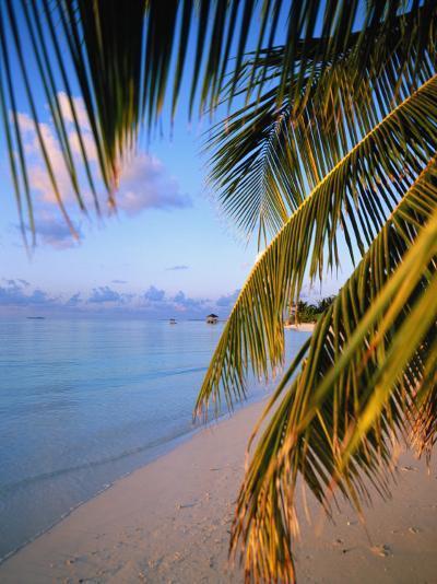 Ari Atoll, White Sands Island and Resort-Angelo Cavalli-Photographic Print