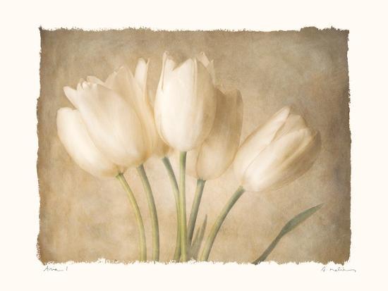 Aria I-Amy Melious-Art Print
