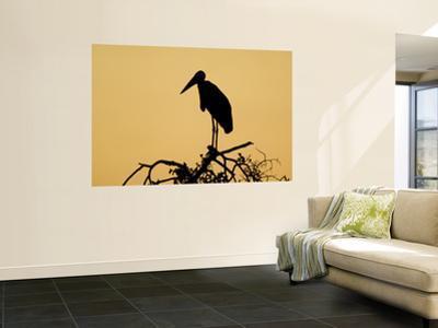 Silhouette of Marabou Stork (Leptoptilos Crumeniferus)