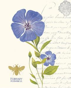 February Periwinkle by Ariane Sarah