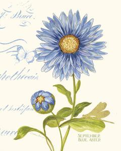 September Blue Aster by Ariane Sarah