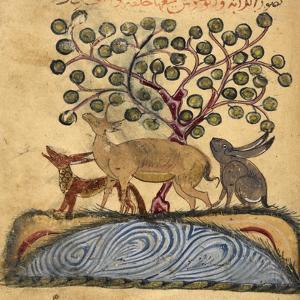 Deer-type, Rabbit and Fox, Standing Over Water by Aristotle ibn Bakhtishu