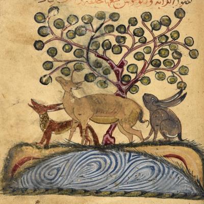 Deer-type, Rabbit and Fox, Standing Over Water