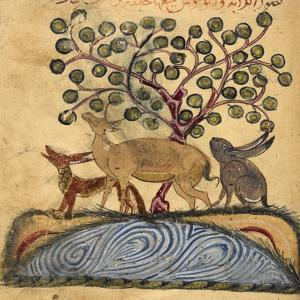 Deer-type, Rabbit and Fox, Standing Over Water by Aristotle ibn Bakhtishu