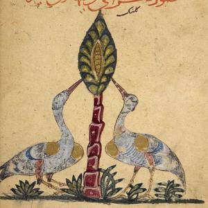 Two Cranes by Aristotle ibn Bakhtishu