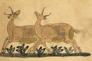 Two Gazelles by Aristotle ibn Bakhtishu