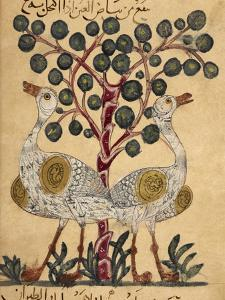 Two Ostriches by Aristotle ibn Bakhtishu