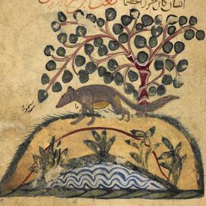 Weasel by Aristotle ibn Bakhtishu