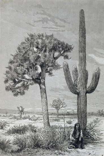 Arizona Desert Landscape with Cactus and Yucca Plants, USA, 19th Century--Giclee Print