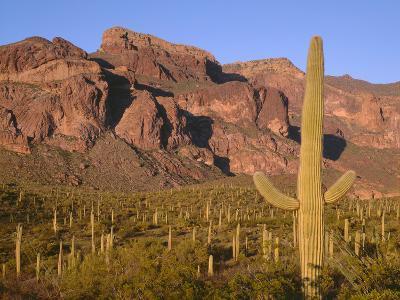 Arizona, Organ Pipe Cactus National Monument-John Barger-Photographic Print