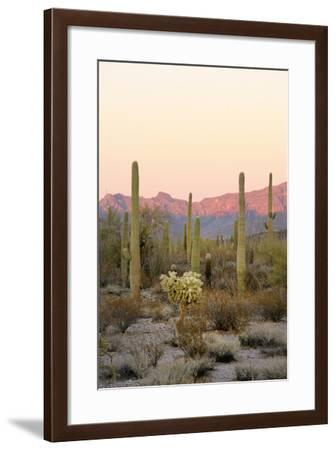Arizona, Organ Pipe Cactus Nm. Saguaro Cactus and Chain Fruit Cholla-Kevin Oke-Framed Photographic Print