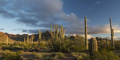 Arizona. Sunset over Desert Habitat, Organ Pipe Cactus National Monument-Judith Zimmerman-Photographic Print