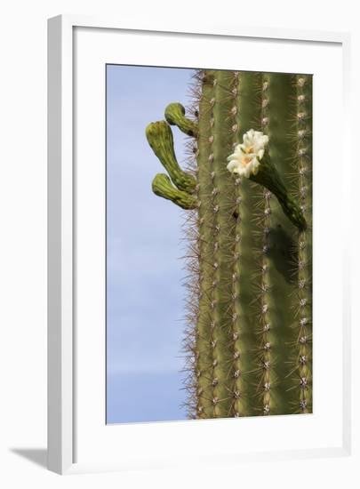Arizona, Tucson, Tucson Mountain Park-Peter Hawkins-Framed Photographic Print