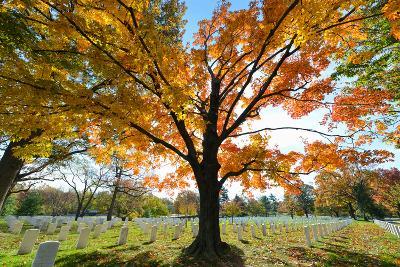 Arlington National Cemetery near to Washington Dc, in Autumn-Orhan-Photographic Print