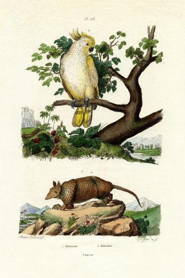 Armadillo, 1833-39--Giclee Print