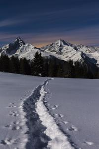 Moonlit Night in the Parc Ela, a Nature Reserve in Canton of Grisons by Armin Mathis