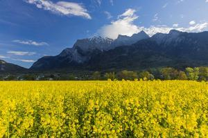 Rape Field in the Grisons Reign by Armin Mathis