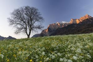 Spring Scenery in the Grisons Reign by Armin Mathis