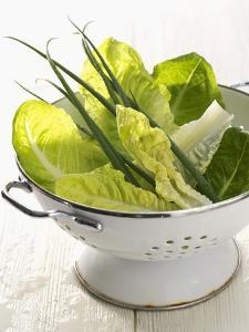 Green Salad and Chives in a Colander by Armin Zogbaum