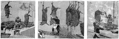Armour Company's Pig Slaughterhouse, Chicago, Illinois, USA, 1892--Giclee Print