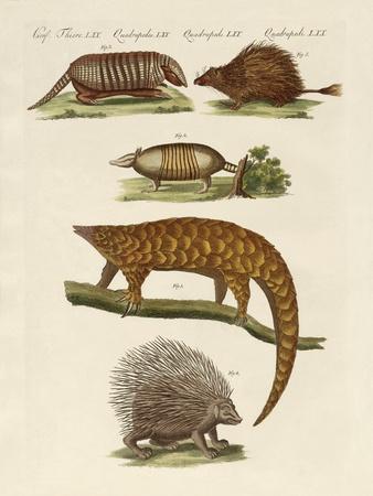 https://imgc.artprintimages.com/img/print/armoured-and-prickly-animals_u-l-pvq6jq0.jpg?p=0