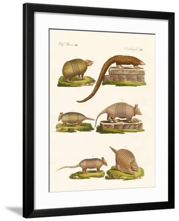 Armoured Animals--Framed Giclee Print