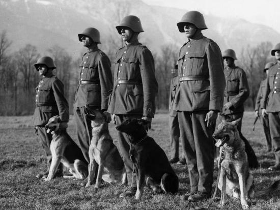 Army Dogs--Photographic Print